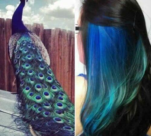 peacock peekaboo highlights